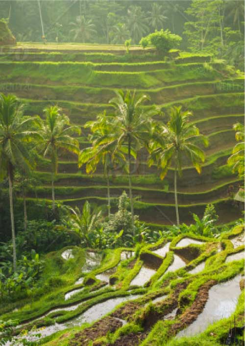 Study abroad in Bali with Asia Exchange