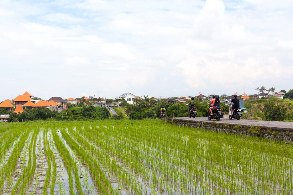 Canggu driving by the rice fields