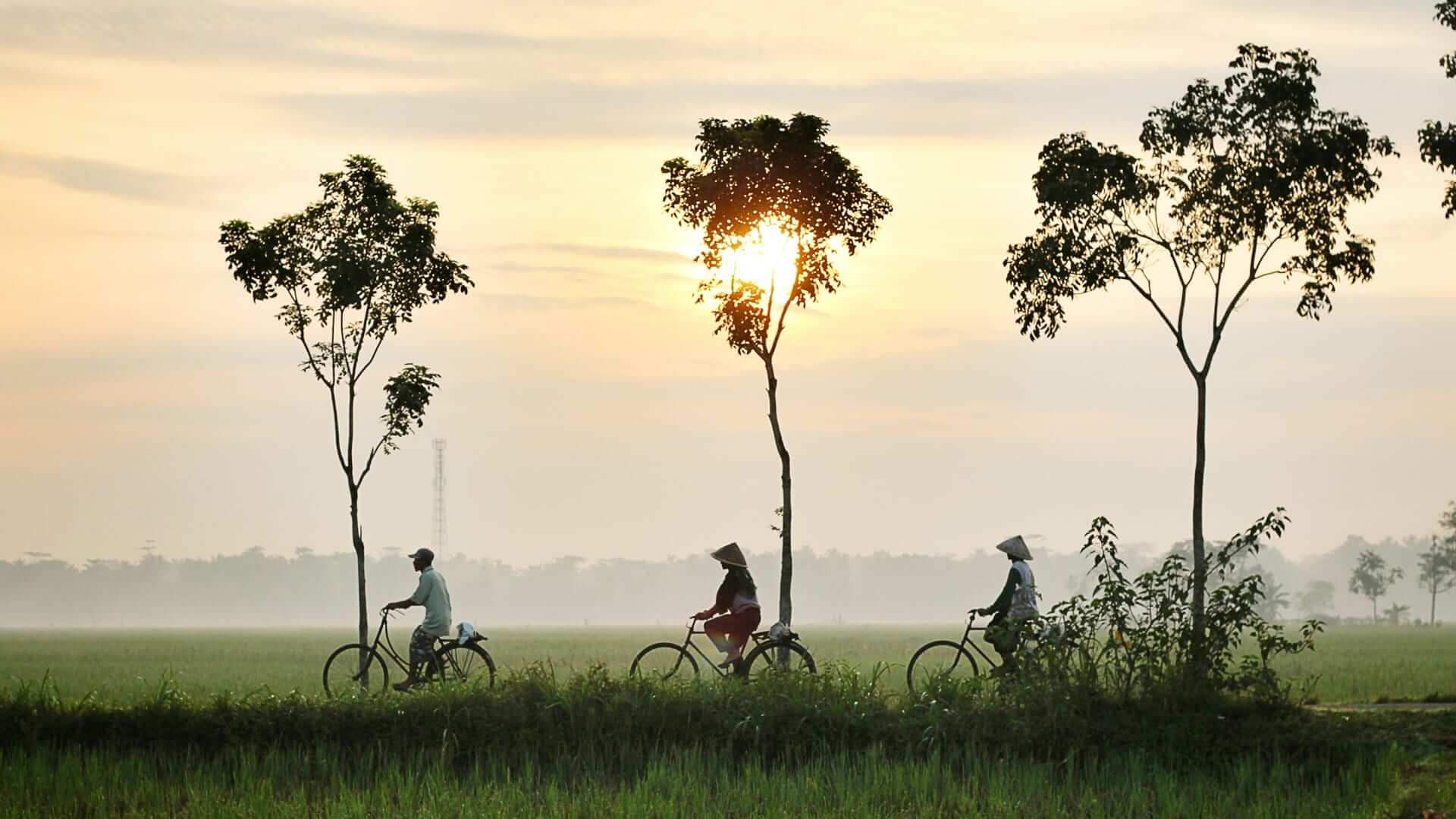 Three people with hats are cycling on a path with high trees between green ricefields during sunrise in Indonesia.