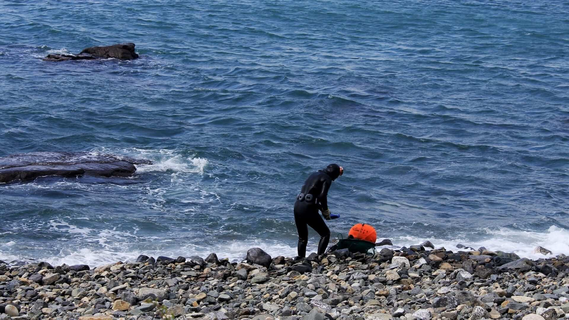 A female diver in a diving suit is picking something at a rocky beach at the Jeju Islands.