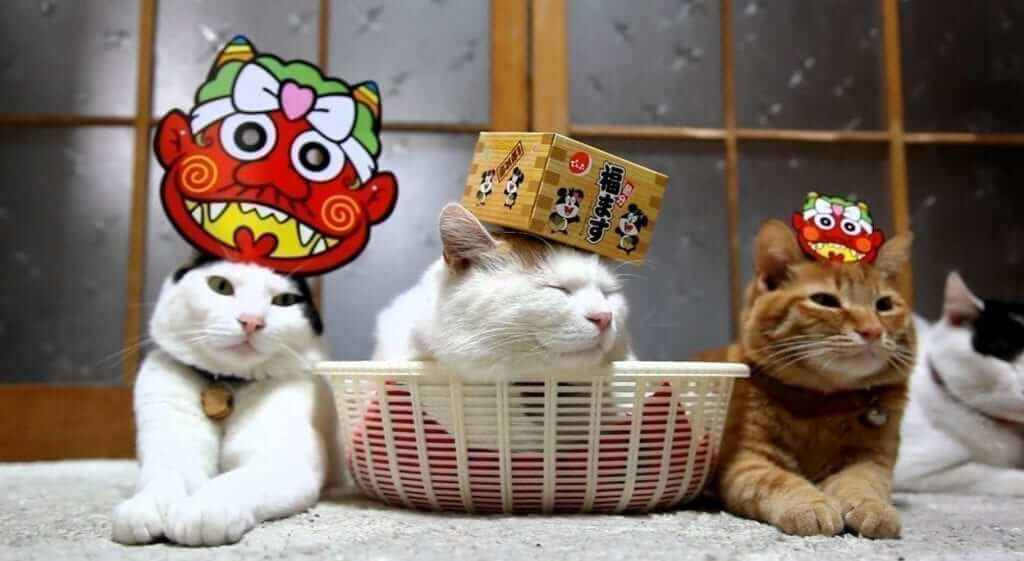 cats setsubun japan
