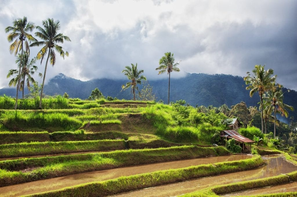 ricefields near the mountain in bali