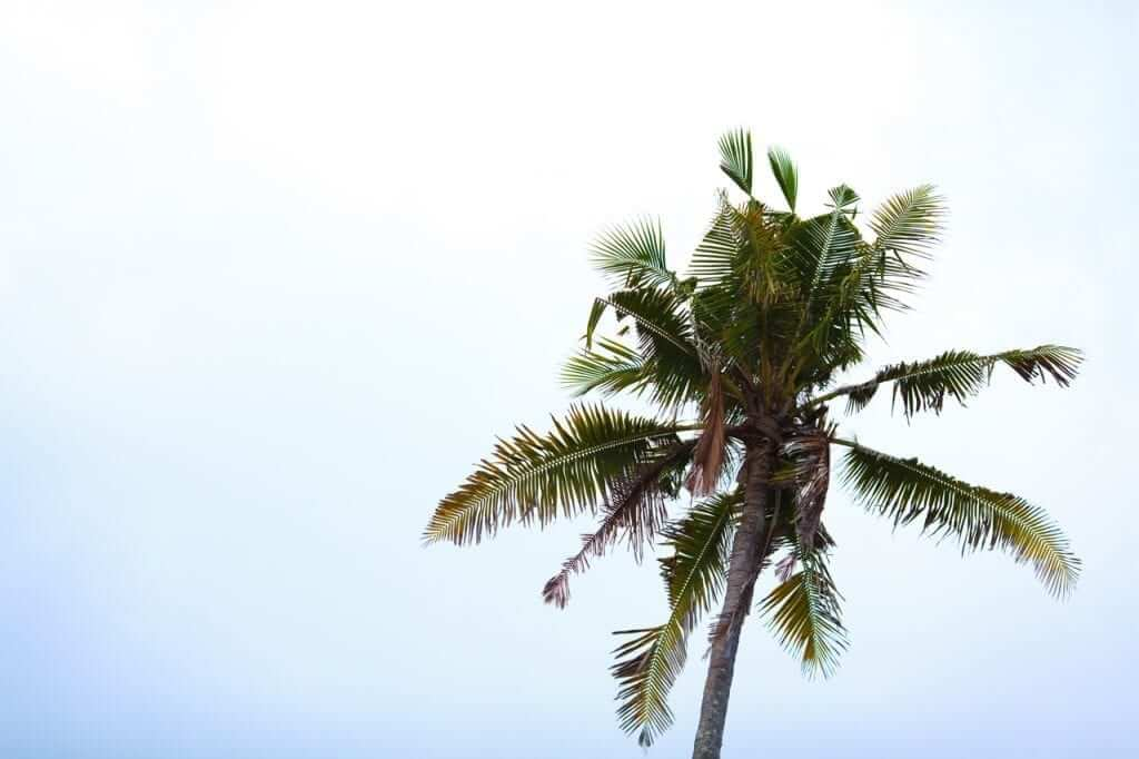 clear blue sky with palmtree