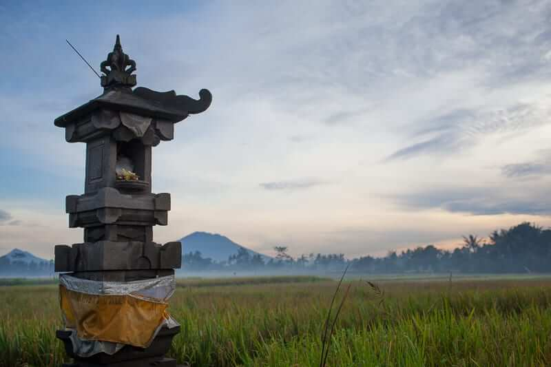 bali_rice_field