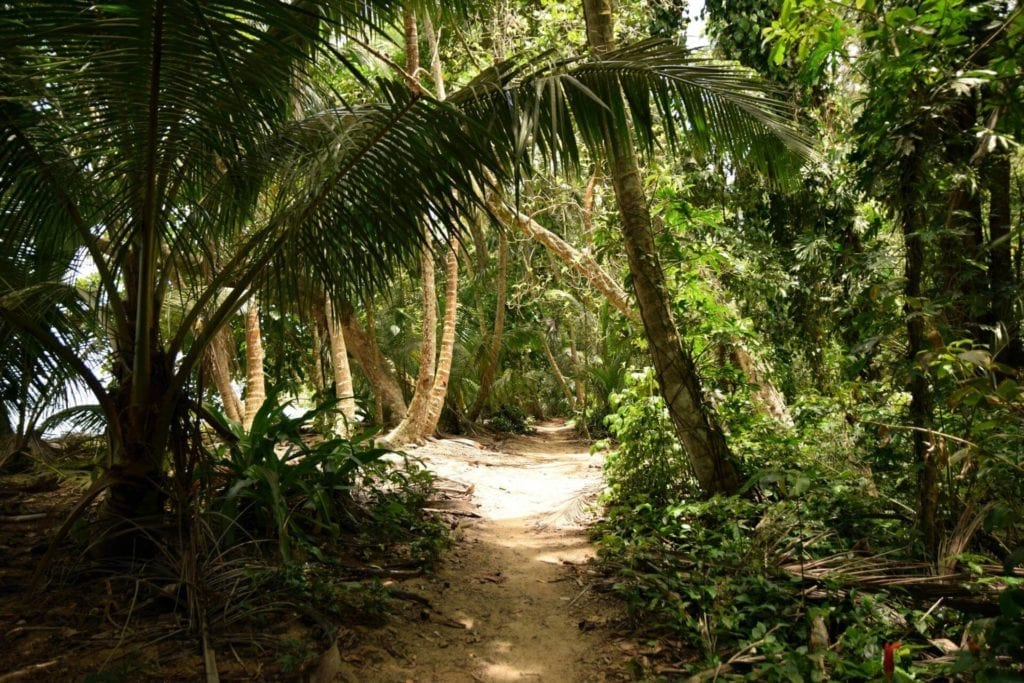 a path in the middle of a Malaysian forest