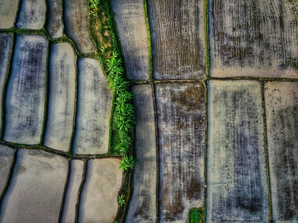 rice terrace from above