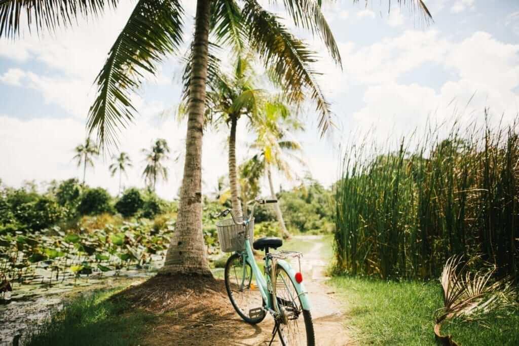 palm tree in Malaysia