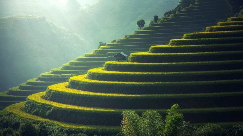 Hilly rice fields
