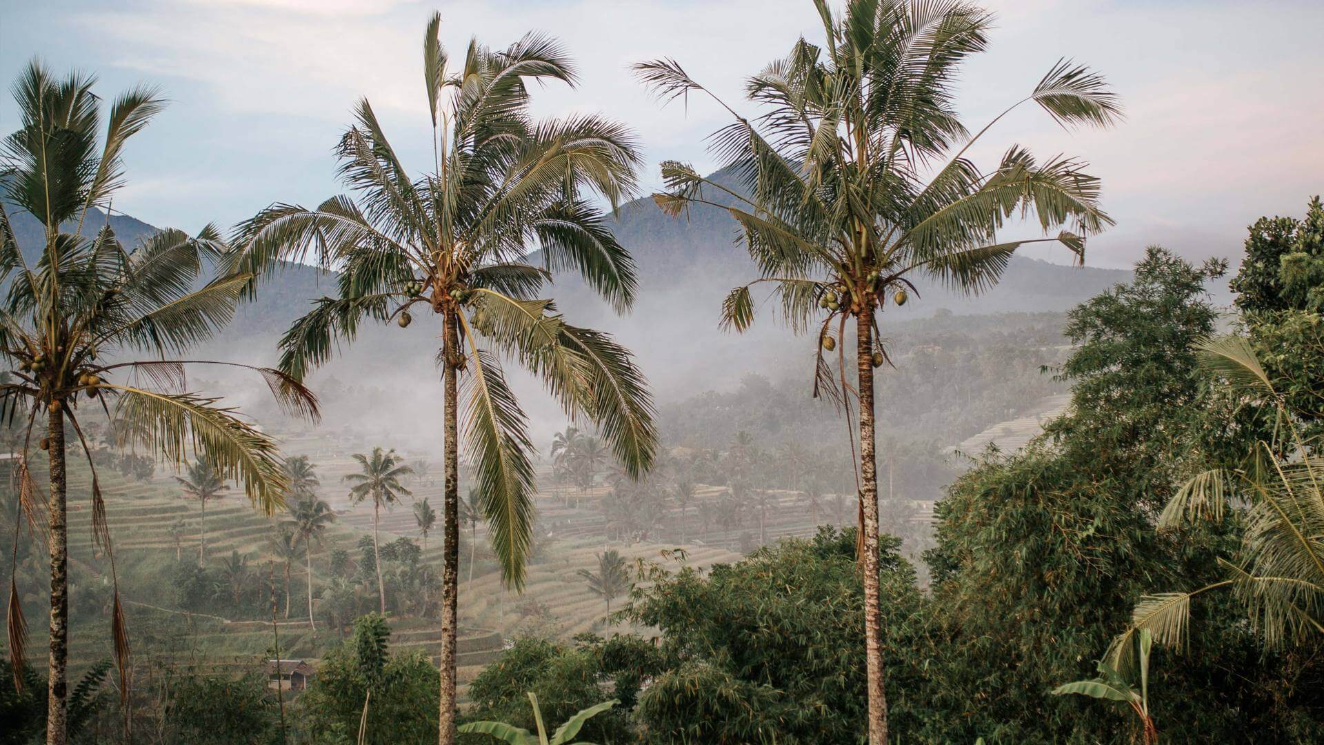 view of palm trees, ricefield and a volcano somewhere in Bali