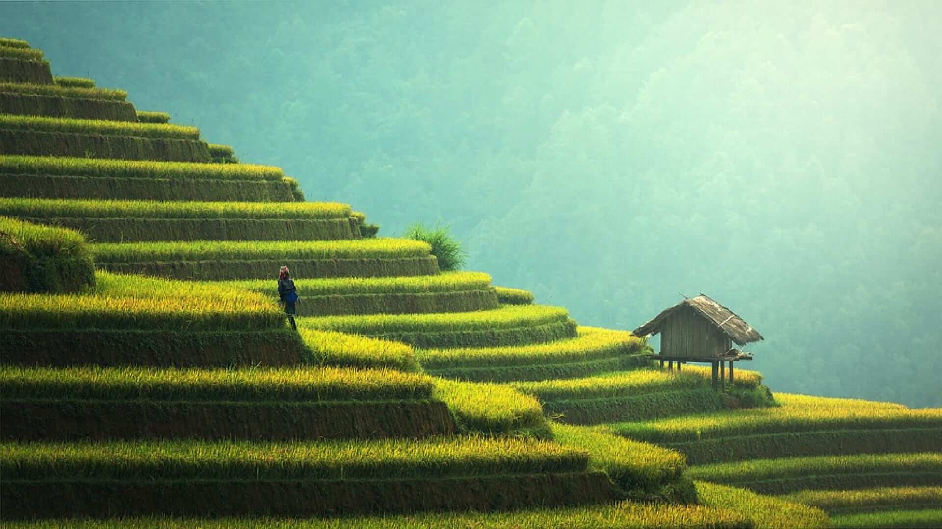A man standing on a green rice terrace with blue sky in Bali.