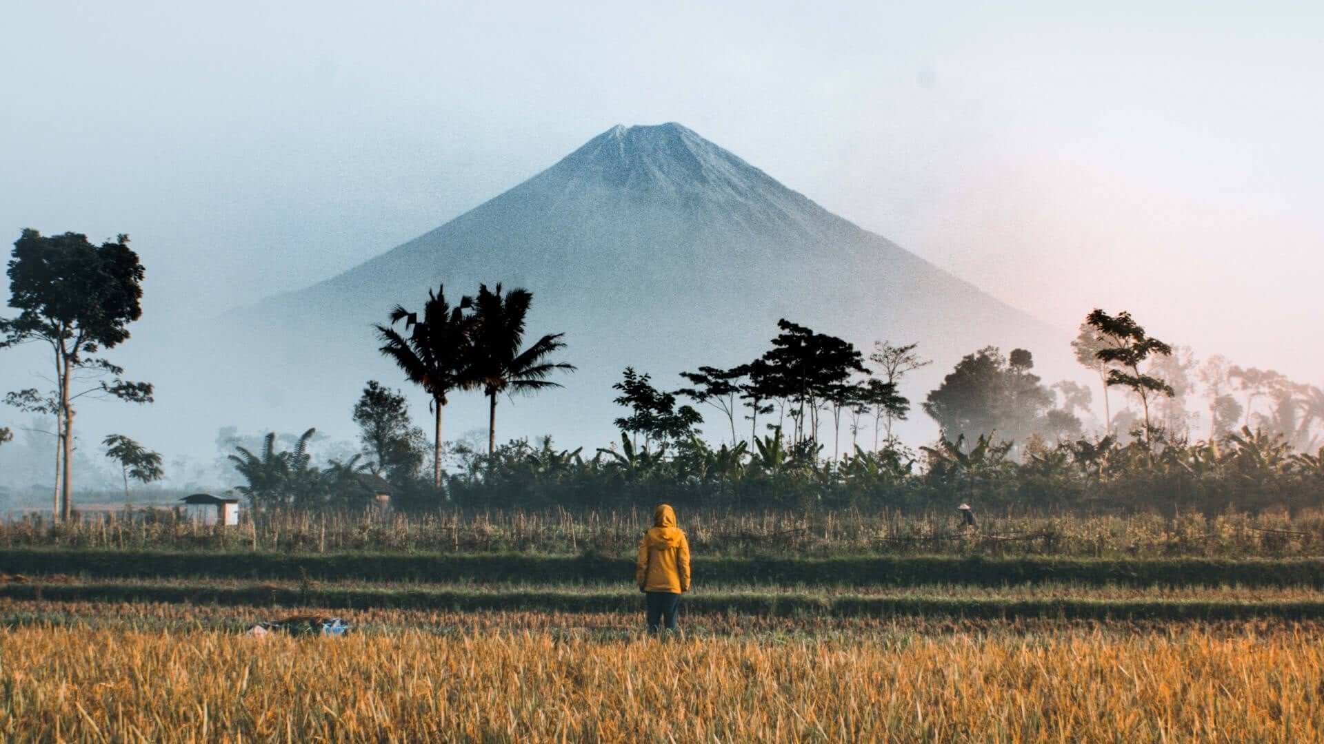Man standing on a rice field watching a volcano.