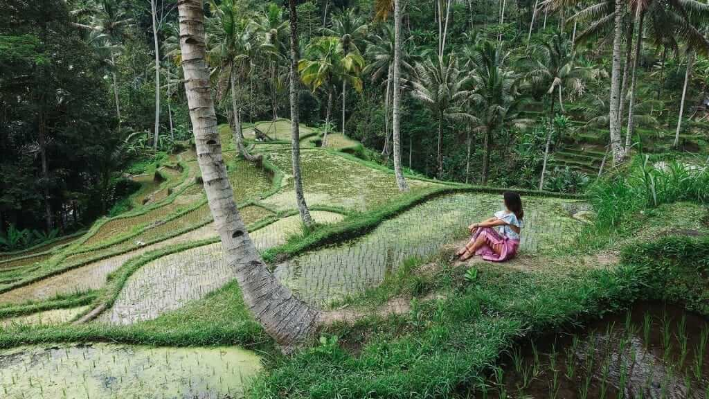 A person is sitting and surrounded by lush green trees and grass