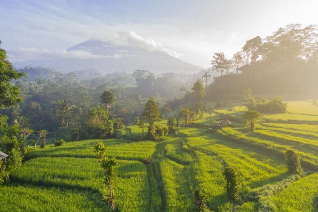ricefield and mountain in Bali