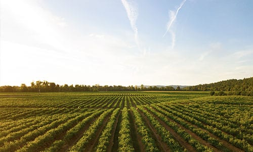 wide field of plants and crops
