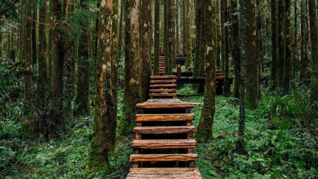 Stairs in a forest covered with trees and green grass