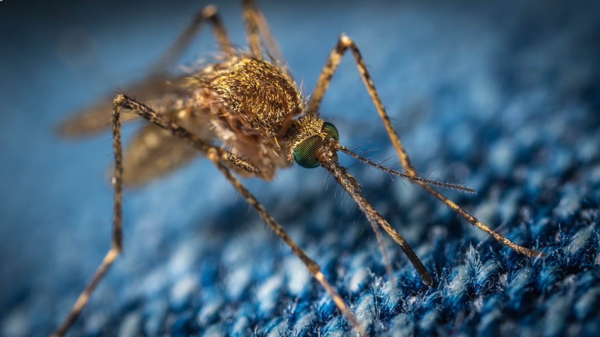 A mosquito is sticking its needle in a blue print.