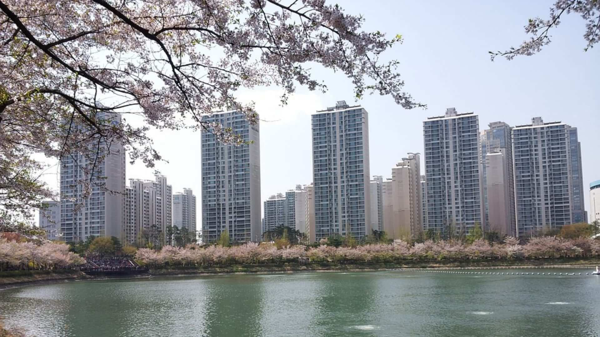 A lake in Seoul with high buildings and a cherry blossom tree next to it in South-Korea.