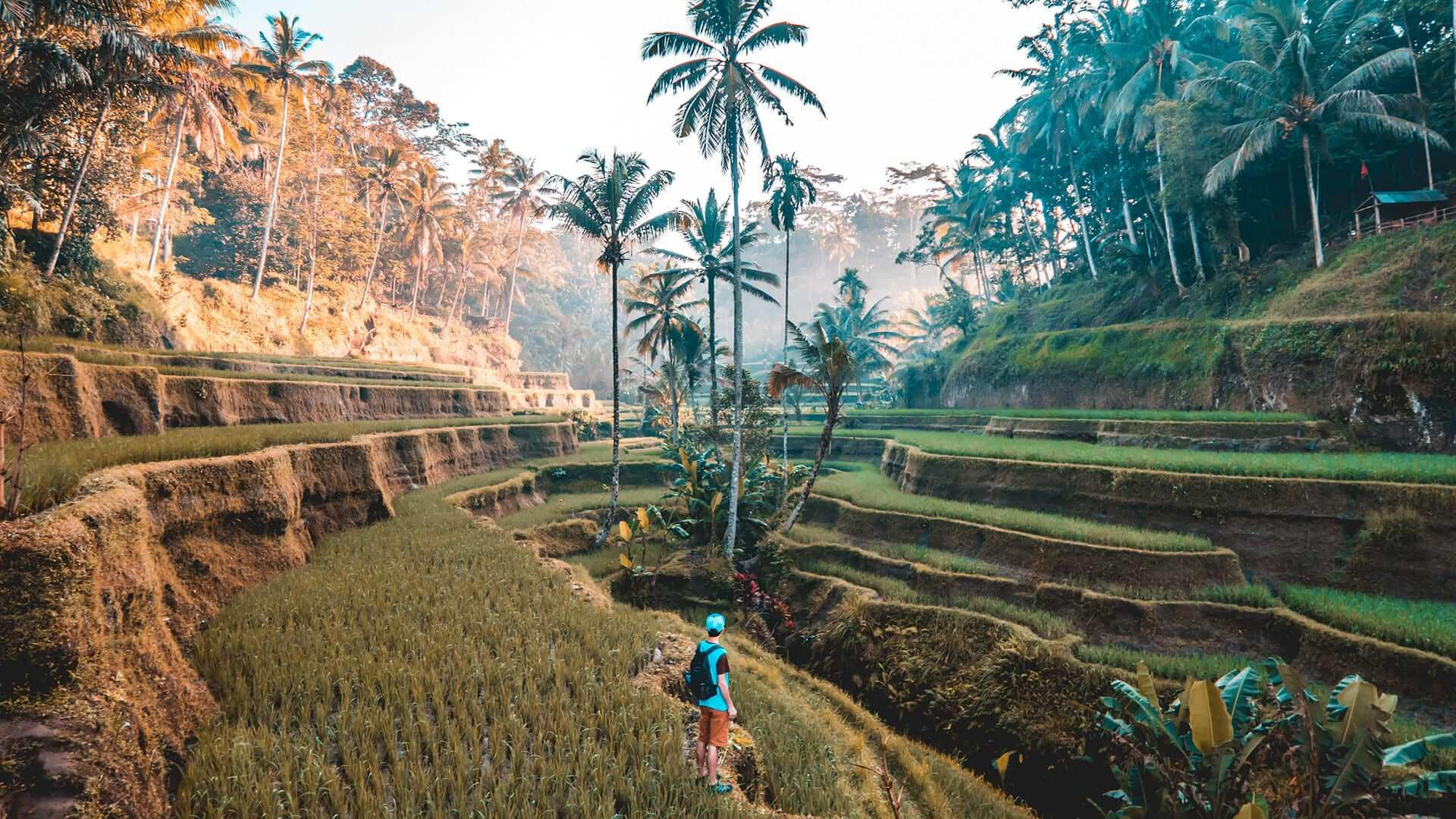 Boy standing in valley of rice paddies