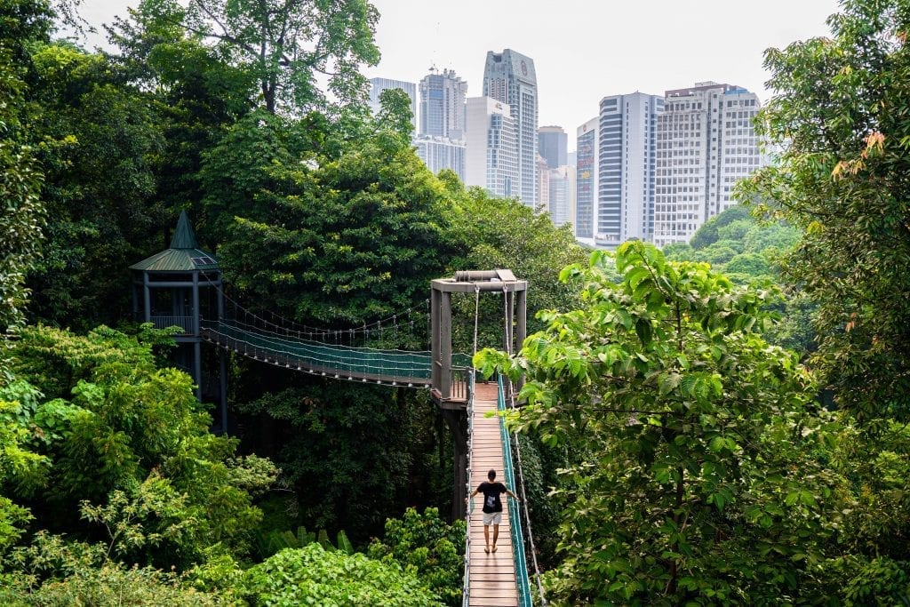 man walking on a bridge in the jungle with skyscrapers in the background