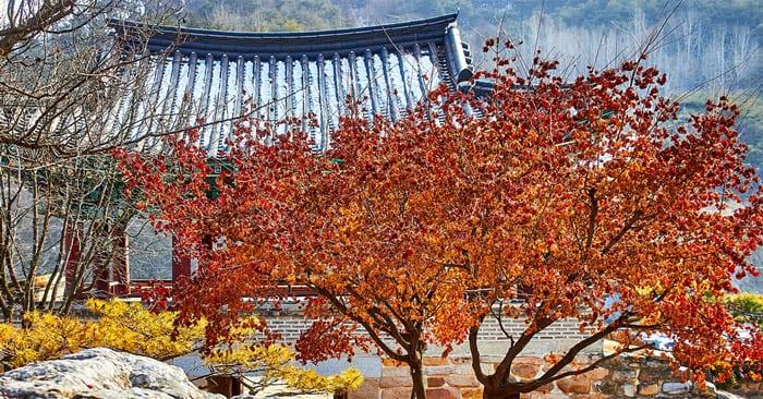 autumn in seoul