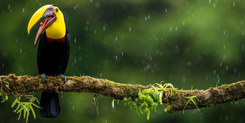 bird sitting on the tree in costa rica